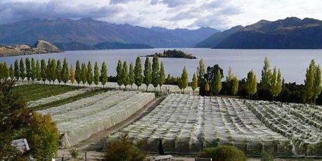 Un vino de Nueva Zelanda, por