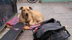 El dueño de la perra 'Sota' niega la versión policial y dice que el animal no mordió al