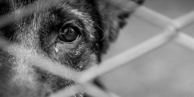 Localizan 31 cachorros congelados y 38 más enfermos en una tienda de