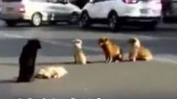 La desgarradora reacción de los compañeros de este perro