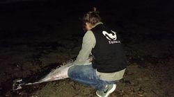 Se busca a Juan, el pescador que hizo la crueldad más grave que se