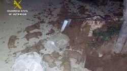 Encuentran nueve cachorros de labrador enterrados vivos en