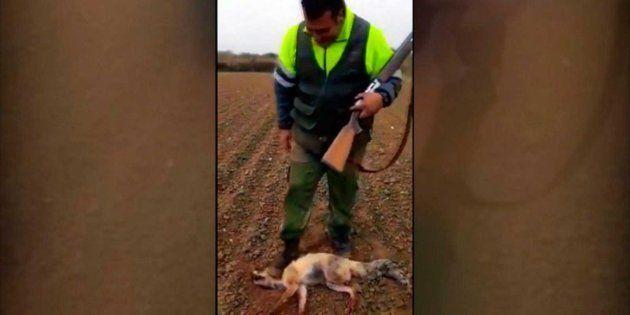 El cazador, pisoteando al