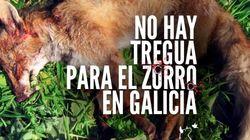 #YoNoDisparo, la campaña del Pacma para acabar con la caza del