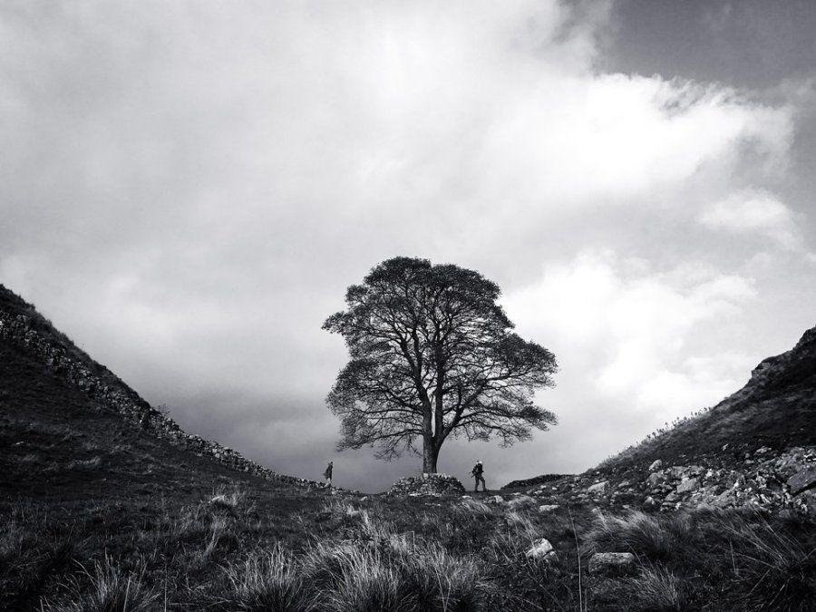 Segundo puesto. 'At Sycamore Gap'. Northumberland, Reino Unido. Con un iPhone