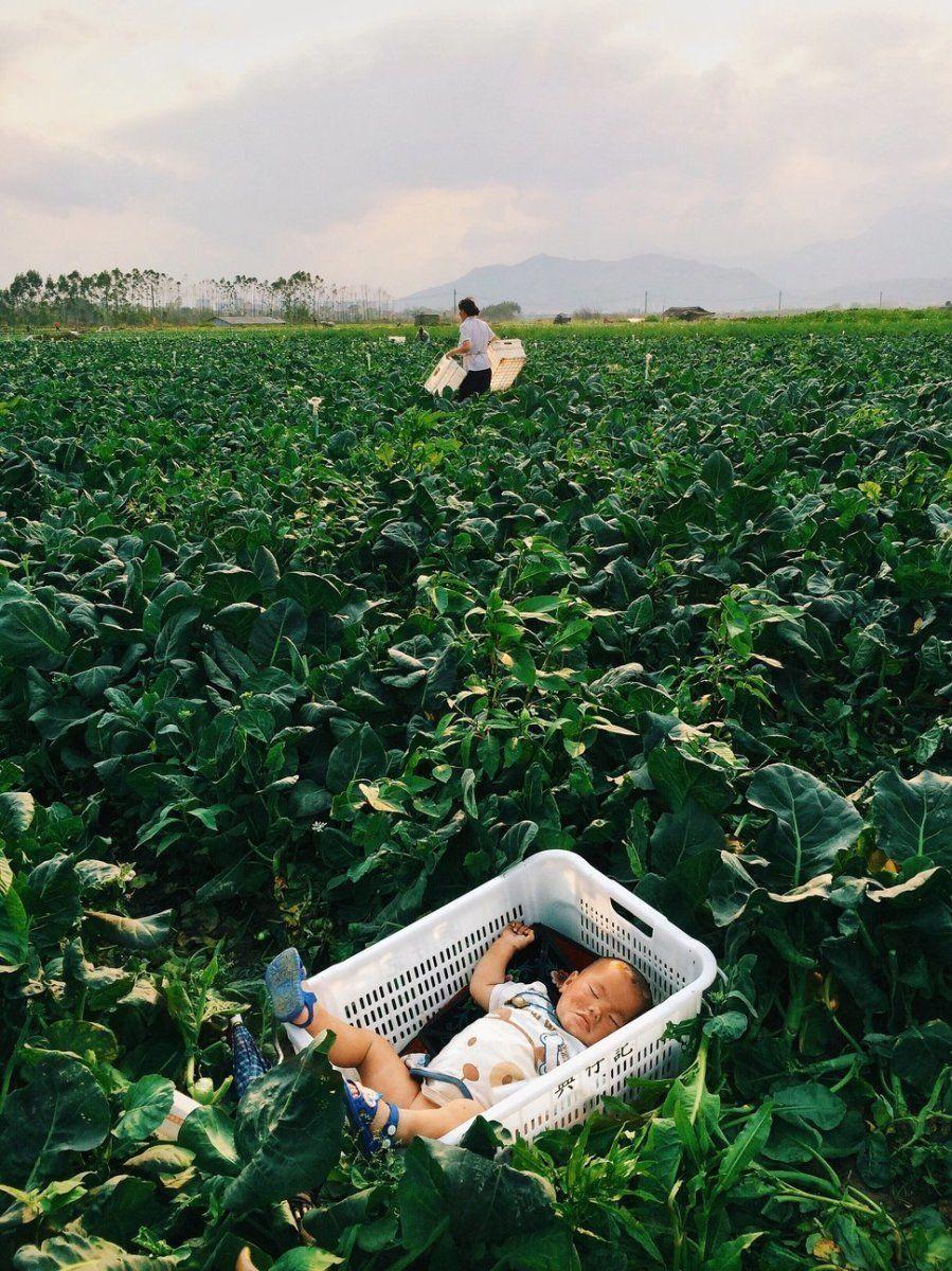 Segundo puesto. 'Sueños en el canasto'. Heyuan, Guangdong, China. Con un iPhone