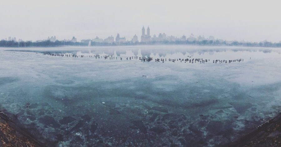 Segundo puesto. 'Frozen Central Park'. Central Park, New York City (EE UU). Hecha con un iPhone