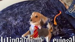 El perro soñado por todo fan de Harry