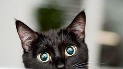 Miles de rusos exigen castigar a una menor por matar a un gato con un
