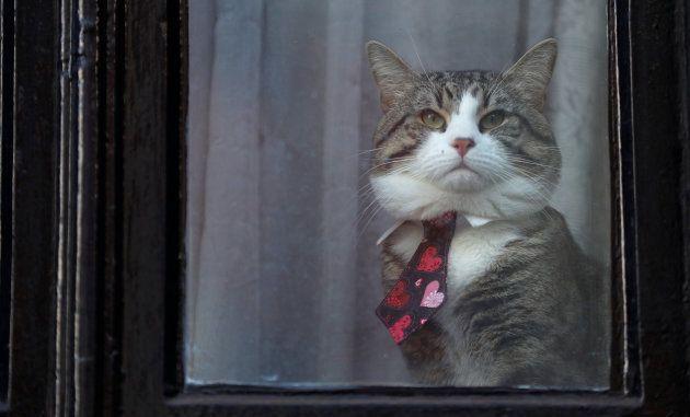 El gato de Assange en una ventana de la embajada ecuatoriana en