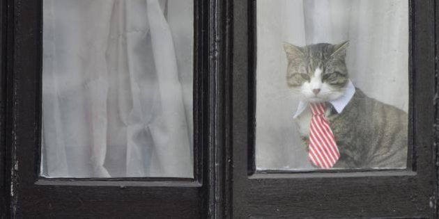 Una gata encorbatada, Pamela Anderson, Twitter... las compañías de Assange en la