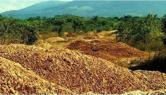Toneladas de cáscara de naranja recuperan una zona forestal en Costa
