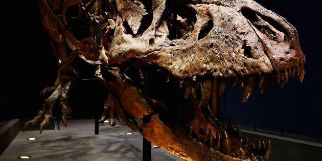 La ciencia descubre otro desastre que provocó la extinción de los