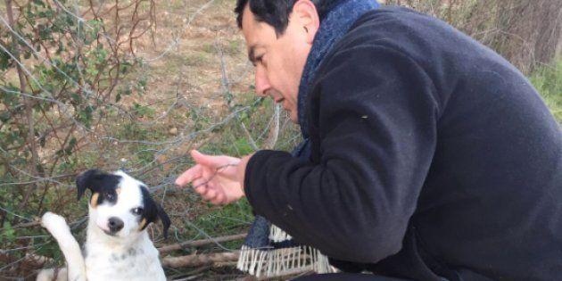 Juanma Moreno Bonilla rescata a un perro