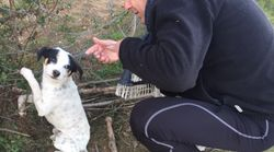 Juanma Moreno publica un tuit sobre un perro maltratado y Pérez-Reverte le da una réplica