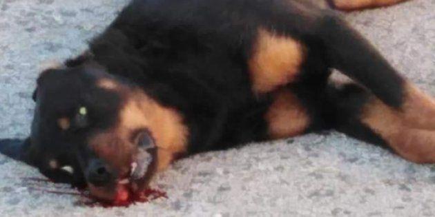 Perro a muerto a tiros en Calafell