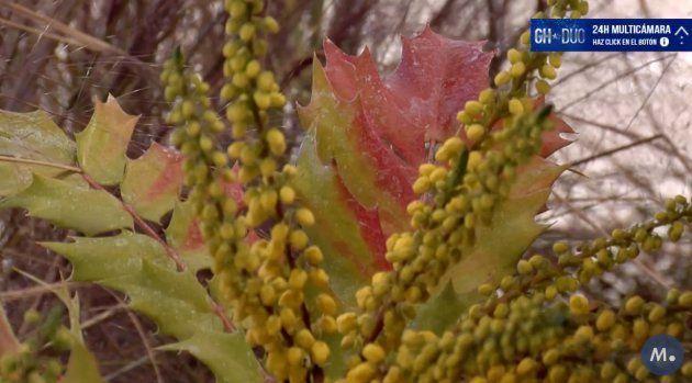 La recurrente imagen de una planta en el canal 24 horas de 'GH DÚO' (Telecinco) enerva a la
