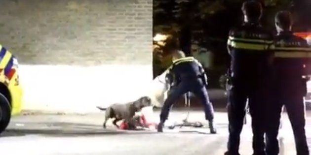 Así tranquiliza la policía holandesa a un perro que protege a su dueña y las redes lo comparan con el...