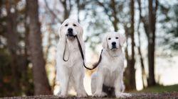 El emocionante reencuentro de dos perros hermanos separados hace un