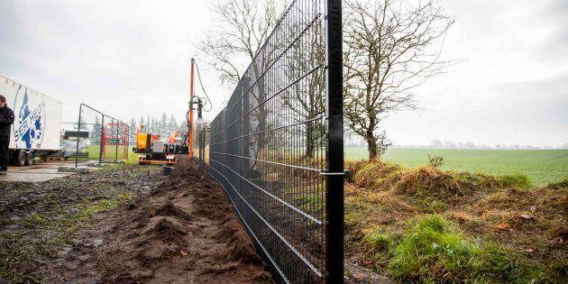 Levantan una alambrada en la frontera entre Dinamarca (izquierda) y Alemania para evitar que los jabalíes...