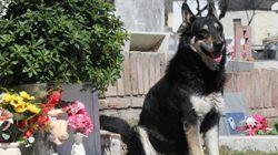 Muere 'Capitán', el perro que veló durante una década la tumba de su amo en