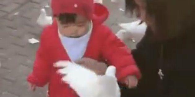 El vídeo de la niña y la paloma que no podrás dejar de