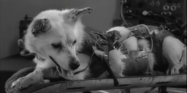 La perra Laika fue el primer animal en salir al espacio y orbitar la