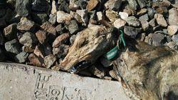 Encuentran a 20 perros muertos que fueron atados a la vía para ser arrollados por el