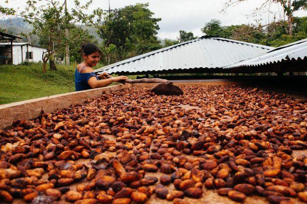 La historia detrás del cacao de tu crema