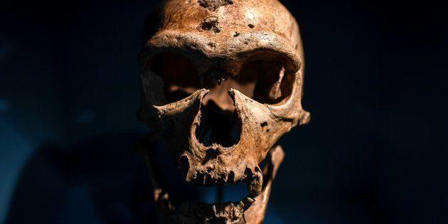 Un cráneo de la exposición sobre Neandertales en el Musee de l'Homme de