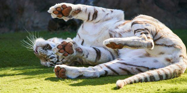 El canario Loro Parque, mejor zoológico del mundo según
