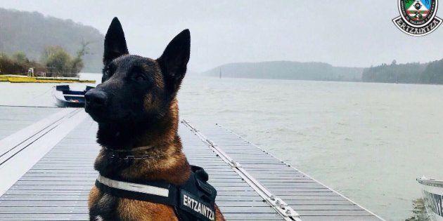 Encuentran a Enno, el perro de rescate de la Ertzaintza desaparecido hace 8