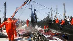 La UE aprueba un nuevo acuerdo pesquero con