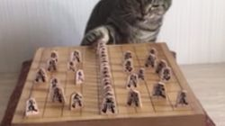 Gatos tirando
