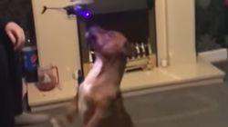 Este perrito se pelea con un