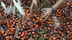 ¿Sabías que el aceite de palma también es perjudicial para el
