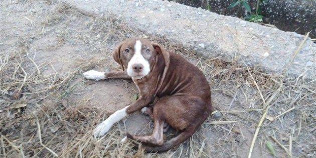 El perro que acompañó al anciano con Alzheimer, en una imagen difundida por el