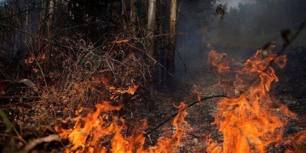 Llamas de un incendio en los montes próximos a la localidad cántabra de Ramales de la