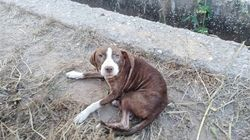 La perra que cuidó toda una noche a un enfermo de alzheimer, adoptada por la familia del