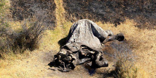 Acabamos de vivir la mayor matanza de elefantes de la historia de