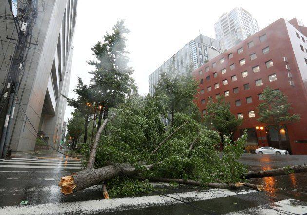 Un árbol bloquea la calle en la ciudad de