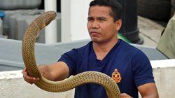 Un famoso encantador de serpientes muere por el mordisco de una