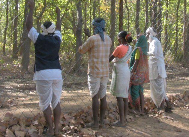 Indígenas gonds y baigas a los que se prohíbe entrar en la Reserva de Tigres de Khana, en la India, el...