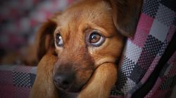 La personalidad de los perros cambia con los años (como la de los