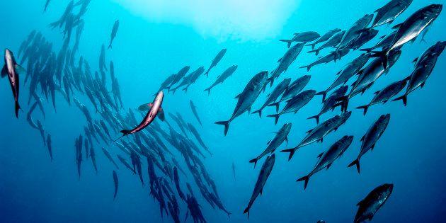 Pescamos en mar abierto, pero ¿cuánto y