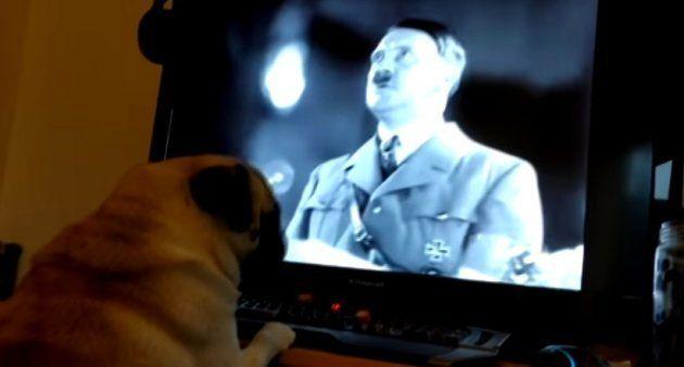 Detenido por enseñar el saludo nazi a su perro y subirlo a