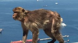 Gibraltar y el