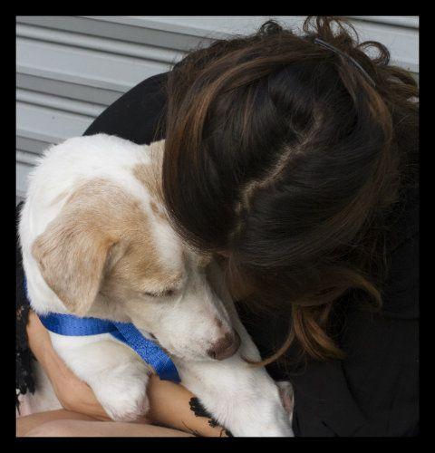 4 maneras de honrar la vida de tu perro después de su