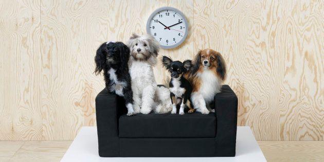 Ikea también hace muebles para perros y