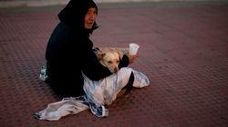 PACMA denuncia que hay mafias que utilizan perros para ejercer la